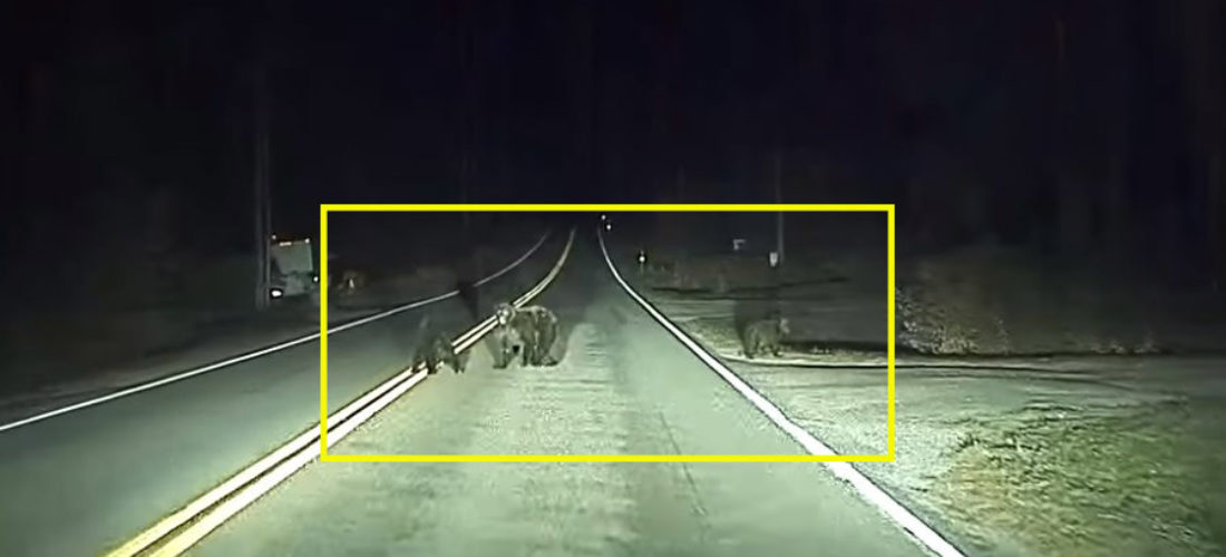 Tesla Autopilot saves a bears family in limited visibility