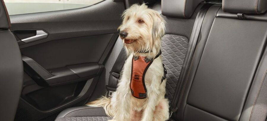 SEAT : Dogs could help in road safety