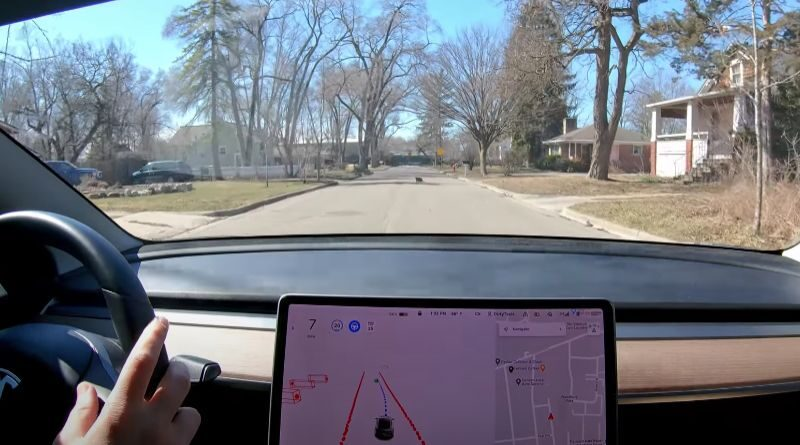 tesla-fsd-beta-reaction-with-cat-crossing-the-road